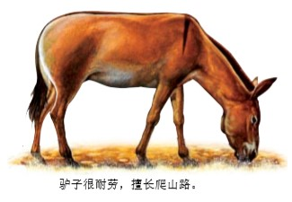 为什么驴爱在地上打滚?
