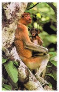 """为什么猴子爱给同伴""""捉虱子""""?"""