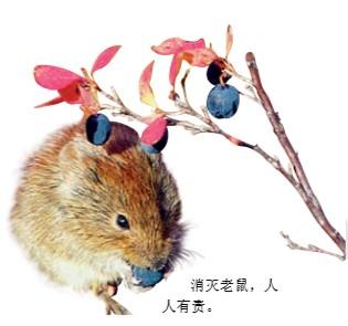 为什么要消灭老鼠?