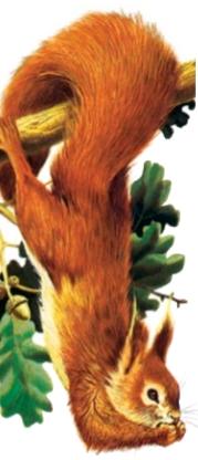 松鼠的大尾巴有什么用?