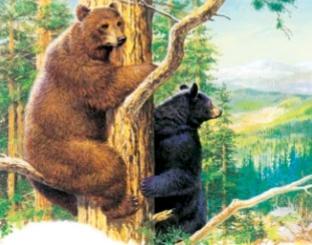 黑熊都是黑色的吗?
