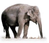 大象真的怕老鼠吗