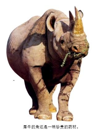 犀牛的角有什么用?