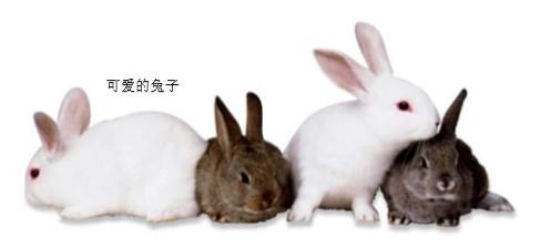 小白兔的眼睛是哭红的吗?