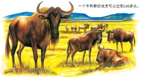 牛羚是牛还是羚?