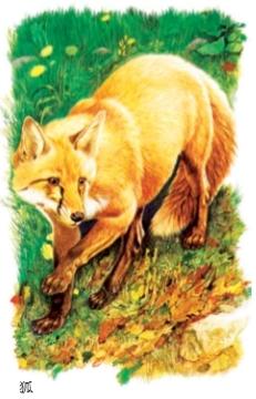 狐和狸是一种动物吗?